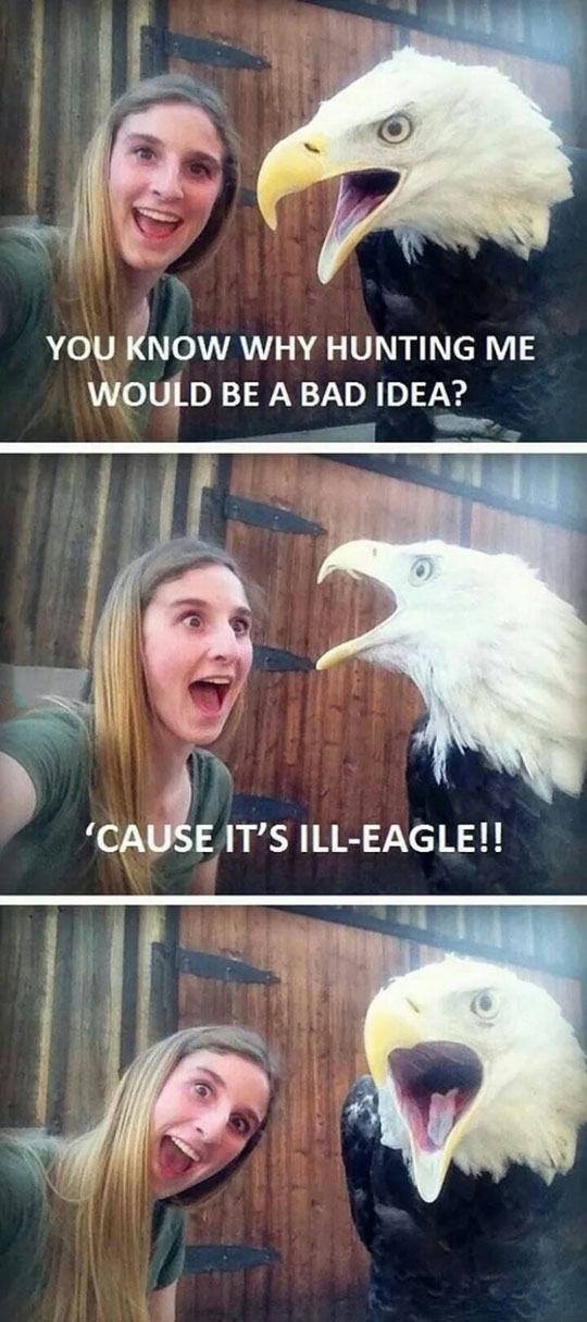 Why Hunting Eagles Is A Bad Idea