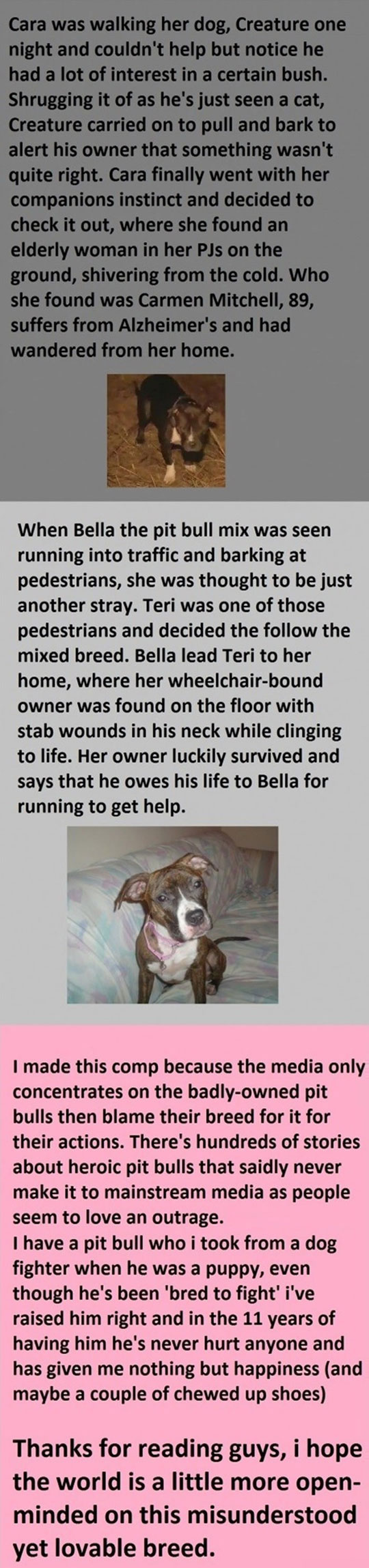 cool-pit-bull-hero-stories