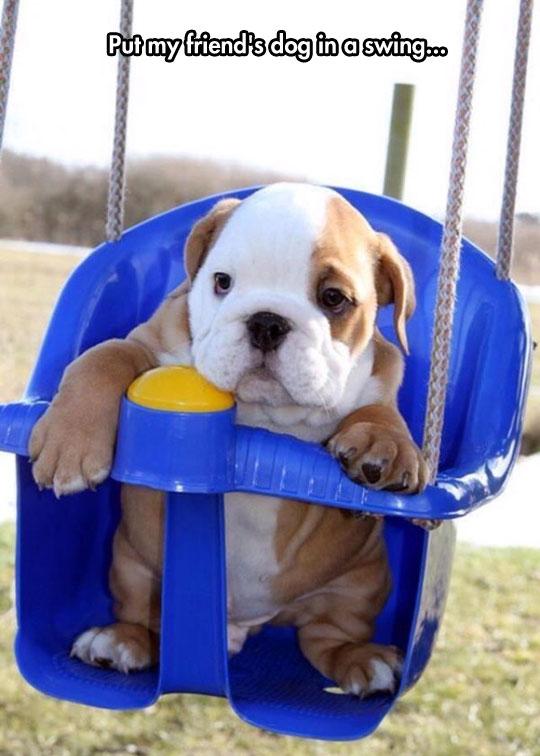 cute-dog-swing-puppy
