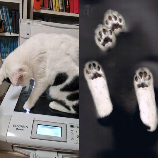 funny-cat-scan-paws-library