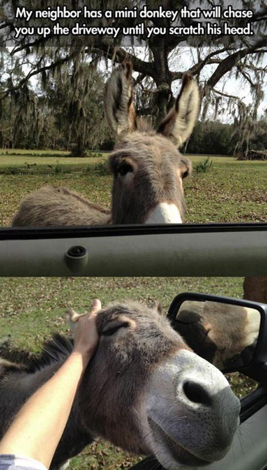 funny-neighbor-donkey-scratch-car