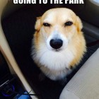 funny-suspicious-dog-face-car