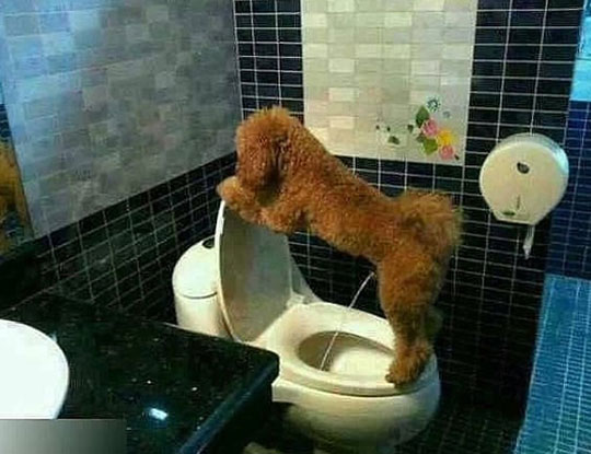 Potty Trained Dog