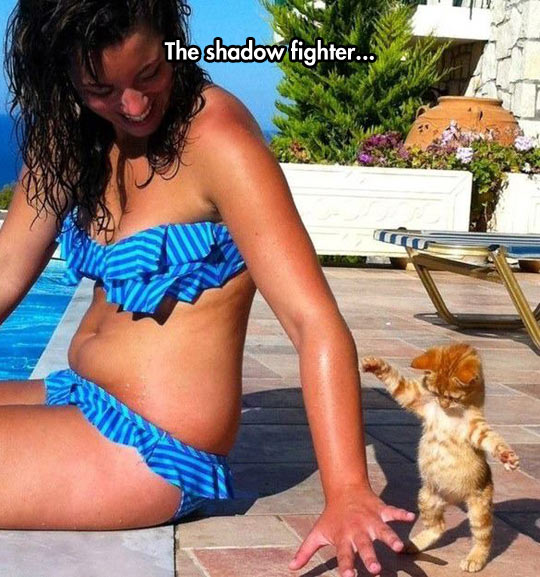 The Shadow Fighter