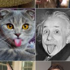 cool-cats-lookalike-Dali-Einstein