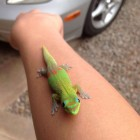 cute-lizard-green-arm-colors