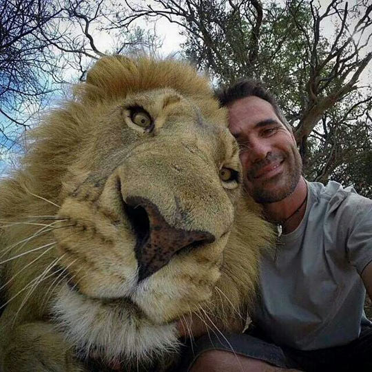 funny-lion-face-zoo-keeper-selfie