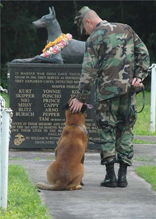funny-marine-war-dog-memorial
