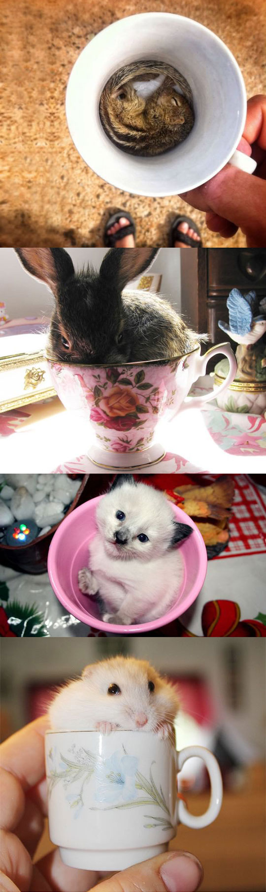 20 Cups Full Of Cuteness