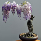 cool-bonsai-tree-little-pot-colors
