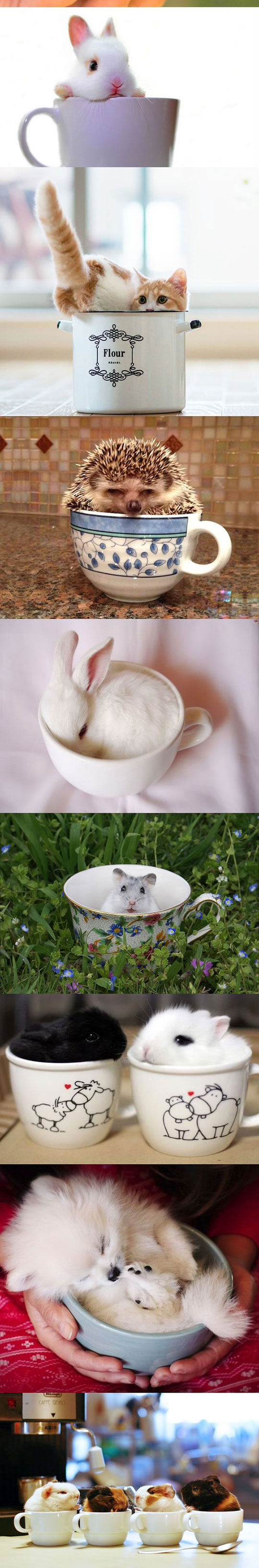 cute-animal-pets-cups-playing