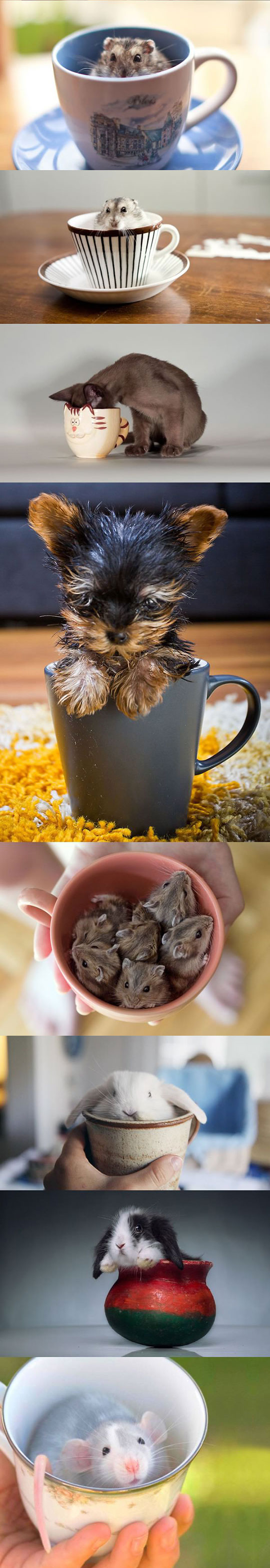 cute-pets-inside-cups-cat