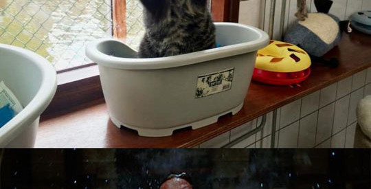 funny-cat-mad-Wolverine-furious