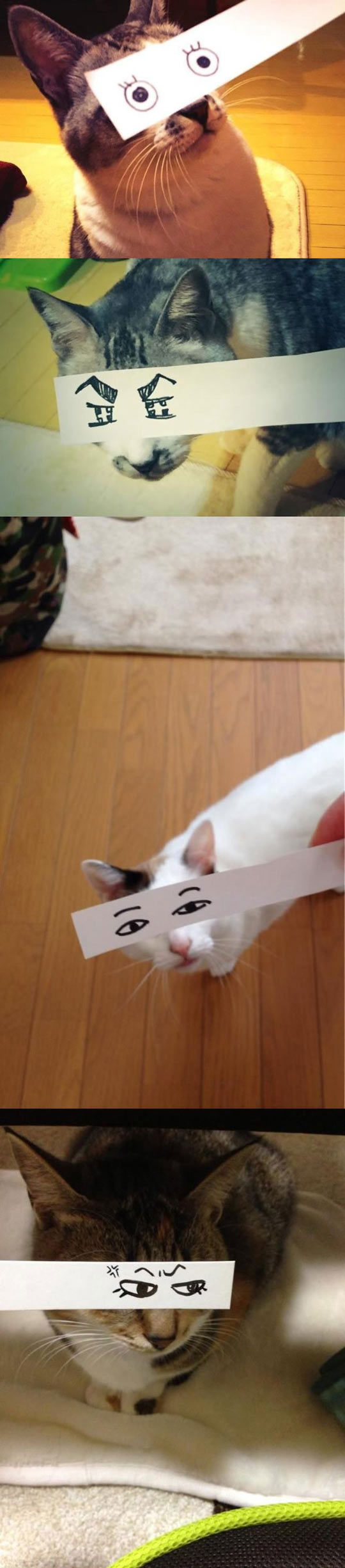 funny-cats-draw-eyes-paper