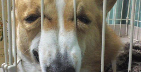 funny-dog-stuck-snout-cage
