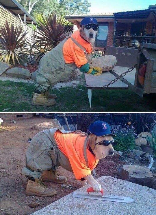 The Best Contractor I've Ever Seen