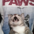 funny-shirt-cat-Paws-movie