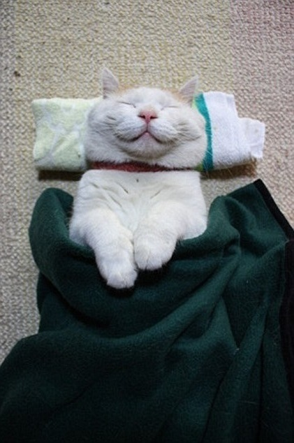 happiest cat you will ever see