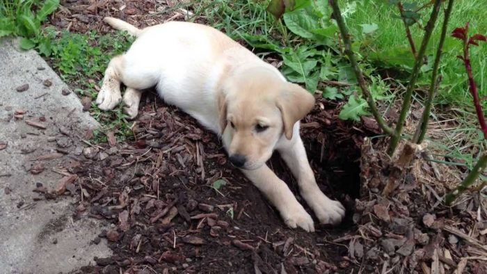 how to stop a dog from digging holes in the yard